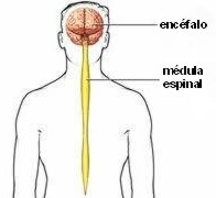 Funciones del intestino delgado yahoo