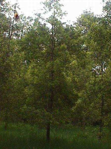En medio del bosque - 2 part 8