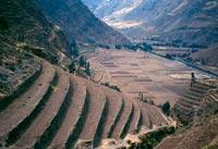 Agricultura Andina Prehispánica