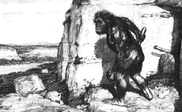 No descendemos de los monos.