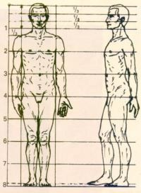 Worksheet. Figura humana proporcionalidad
