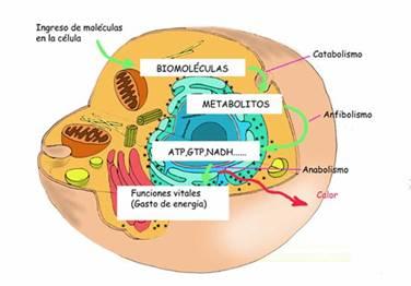 sustancias anabolicas no hormonales