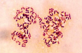 bacteria001