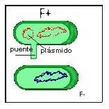 bacteria016