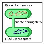 bacteria017