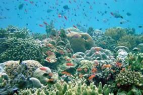biodiversidad002