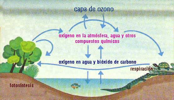 Ciclo Oxígeno