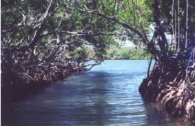 ecosistema001