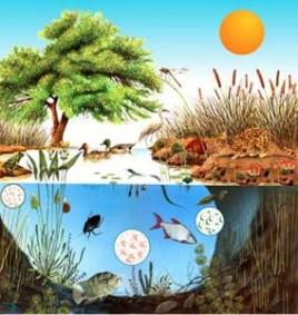 ecosistema008