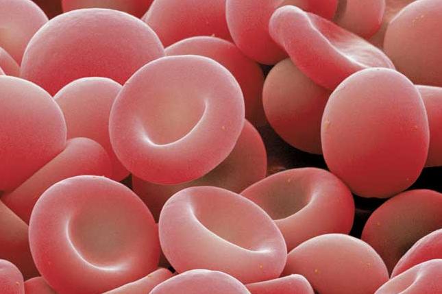 globulo rojo sangre: