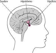 hormonasex003