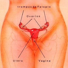 menstrual003