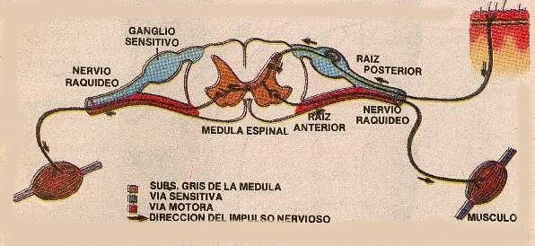 neurona002