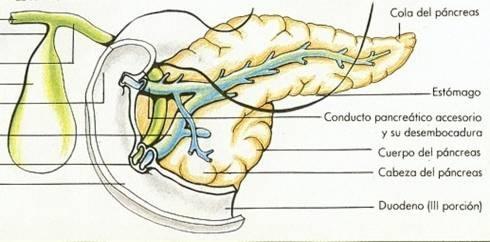 whipple procedure surgery length