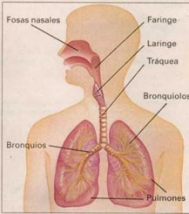 Circuito Respiratorio : Circuitos respiratorios universales para ventiladores con