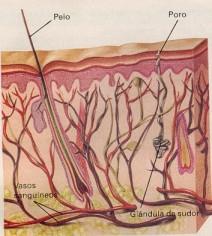 el cafe es malo para el acido urico acido urico alto rodilla