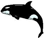 Orca o Ballena Asesina Orca02