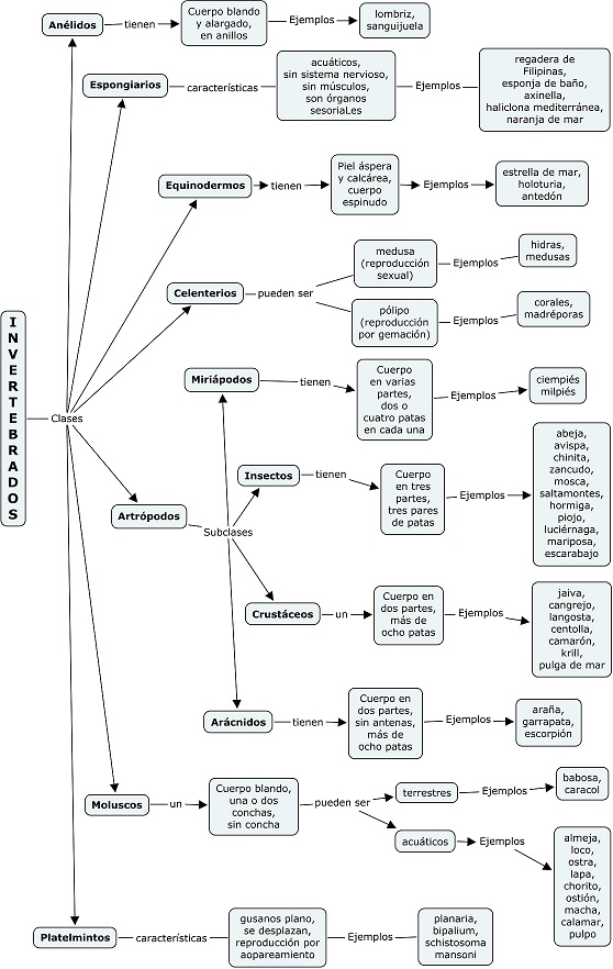 Clasificación de invertebrados